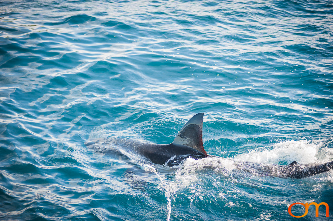 Port Lincoln and Great Whites